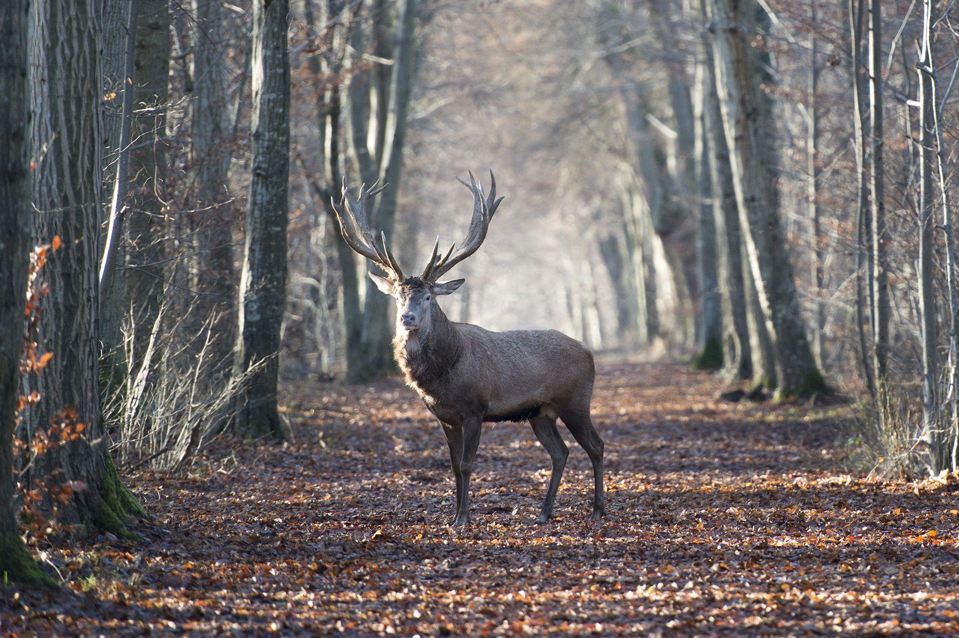 Príbeh lesa